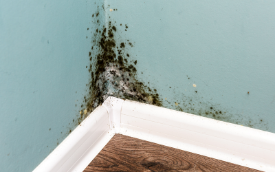 Risks Of Mold In Your Home Or Business
