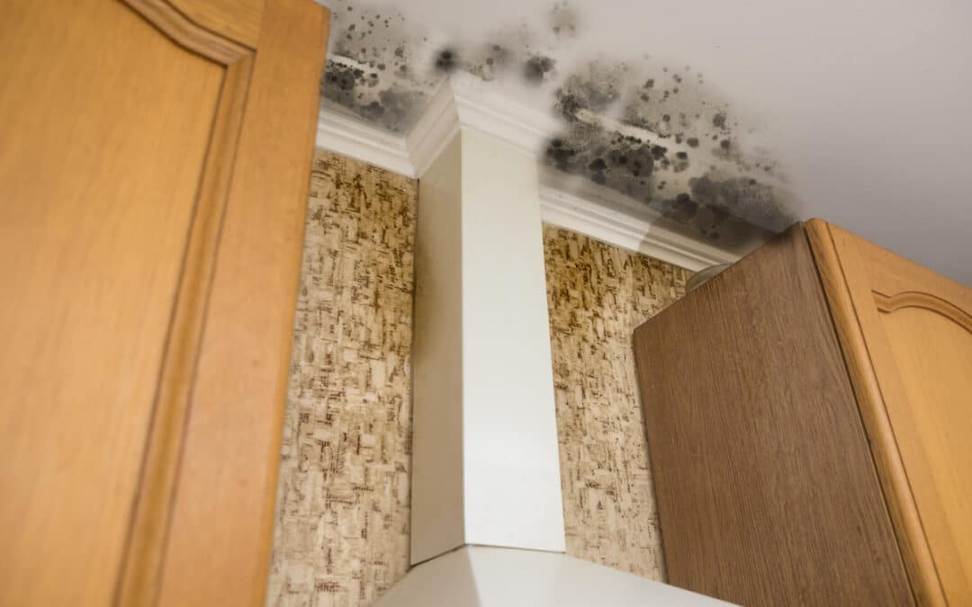 3 Mistakes That Can Cause Mold Problems